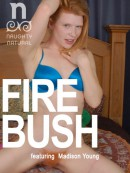 firebush-naughtynaturalsboxart